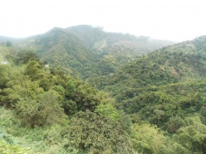 Images of mountain in the Blue Mountain